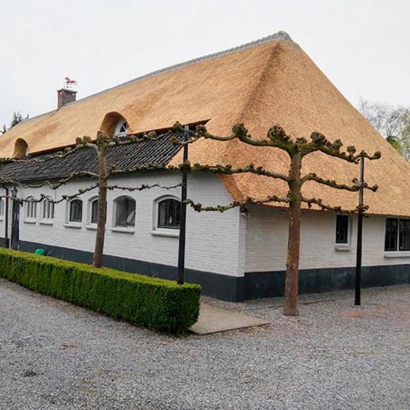 Referentie Rietdekkersbedrijf Molenaar: rieten dak woonboerderij Veghel